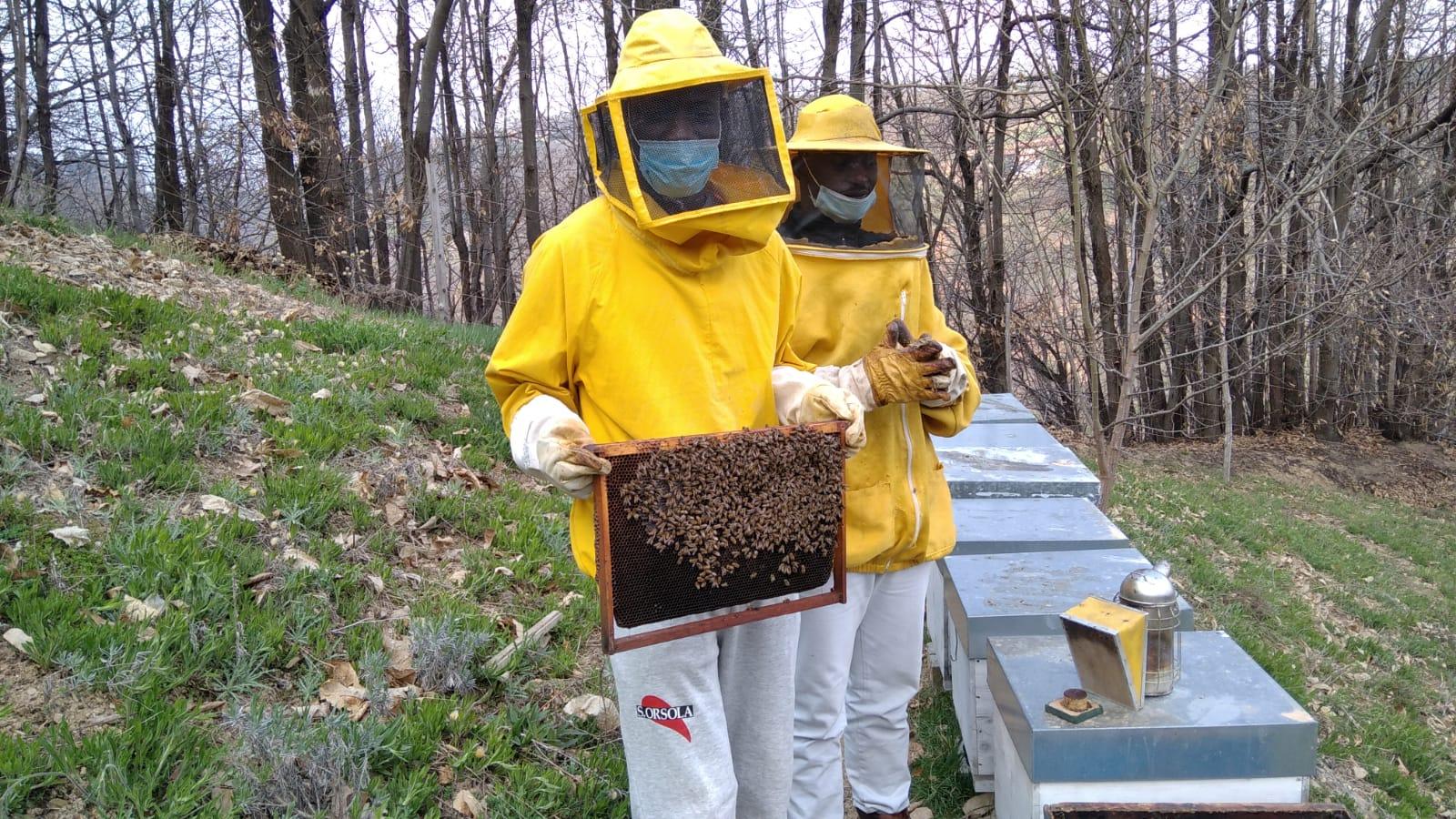 Da stagionali ad apicoltori con Bee My Job